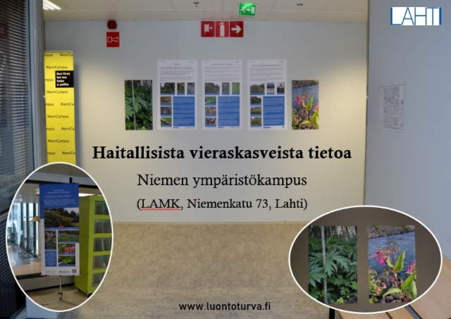 haitallisista_vieraskasveista_tietoa_lamk_luontoturva.fi