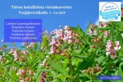 vesijarviikolla_tietoa_haitallisista_vieraskasveista