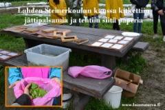 lahden_steinerkoulun_oppilaiden_kanssa_kitkettiin_jattipalsamia_ja_tehtiin_siita_myos_paperia_luontoturva.fi