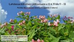 lahdessa_12.6.19_kitketaan_jattipalsamia_merrasojan_varrella