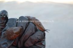 0935_espanjansiruetana_haitallinen_vieraslaji_miia_korhonen_luontoturva.fi