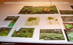 luontoturvan_tiedotusta_asikkalan_vieraslaji-illassa_8.10.19