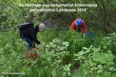 lahti_ita-hameen_puutarhamartat_kitkemassa__jattipalsamia_2019_luontoturva.fi