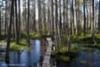 linnaistensuolla_lahdessa_luontoturva.fi