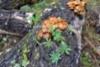 0964_haitalliset_vieraslajit_voi_siirtya_uusille_alueille_monin_tavoin_miia_korhonen_luontoturva.fi