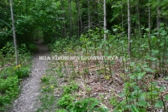 0998_japanintatar_leviaa_juurella_miia_korhonen_luontoturva.fi