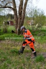 0999_jattiputken_torjuntaa_kaivamalla_miia_korhonen_luontoturva.fi