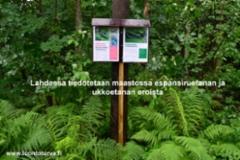 lahdessa_tiedotusta_espanjansiruetanan_ja_ukkoetanan_eroista_miia_korhonen_luontoturva.fi