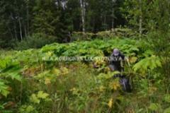 1016_suojaudu_kasitellessasi_jattiputkia_miia_korhonen_luontoturva.fi