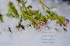 3_lupaus_talvesta_miia_korhonen_luonnon_voima