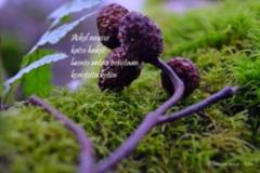 4_luonto_miia_korhonen_luonnon_voima