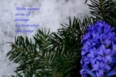 6_meidan_maamme_miia_korhonen_luonnon_voima