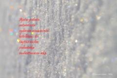 23.12.2020_ajatus_joulusta_miia_korhonen_luonnon_voima