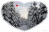 mieli_lepaa_metsassa_www.luontoturva.fi