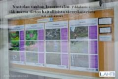 nastolan_tiedotusta_haitallisista_vieraslajeista_8.3_-_15.4.21_luontoturva.fi