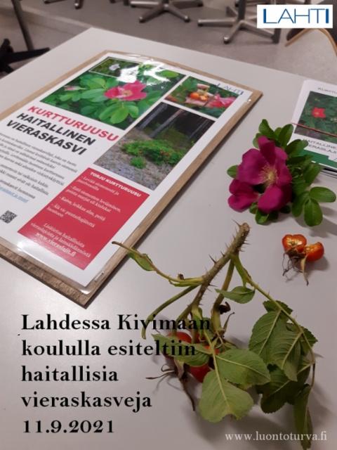 lahdessa_kivimaan_koululla_esiteltiin_haitallisia_vieraskasveja_www.luontoturva.fi