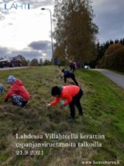 21.9.2021_lahdessa_villahteella_kerattiin_espanjansiruetanoita_talkoilla_21.9.2021_miia_korhonen_luontoturva.fi