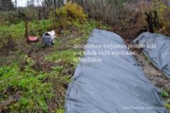 1088_jattiputken_peittamista_myohaan_syksylla_miia_korhonen_luontoturva.fi