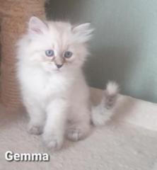 Gemma 8vk