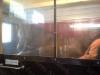 Sirkan Samu ja Kalevi suolahuoneessa