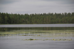 järvellä