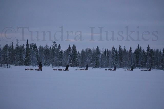 tundra_huskies_safarilla