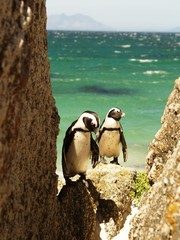 pingviinit kallionkolossa