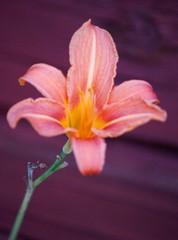 Kukka Raision taidetalon aitalla