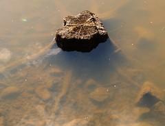 Vedenalainen kanto
