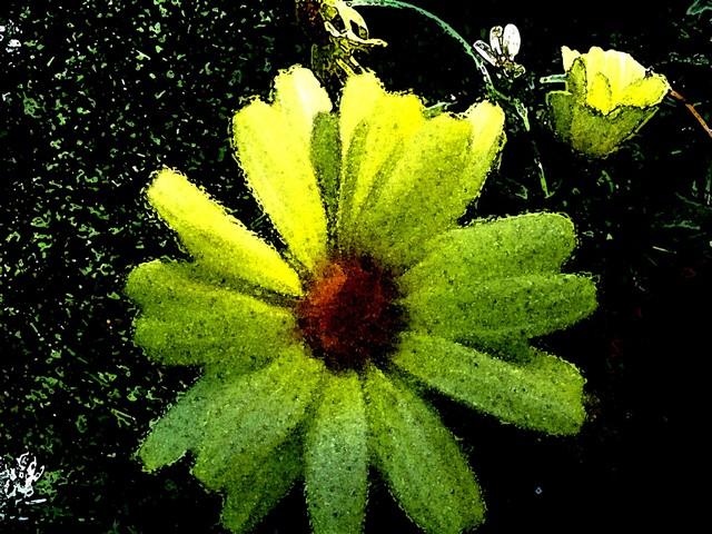 Oman pihapiirin kukkia, kuvaa muokattu