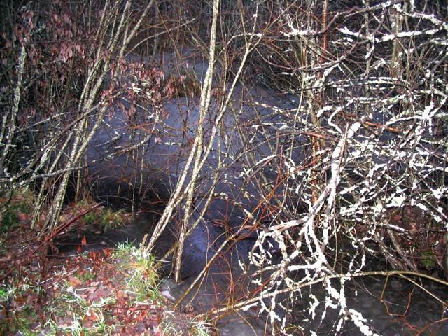 Ruissalo joulukuussa 2004