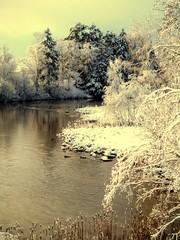 Marraskuun märkä kylmyys