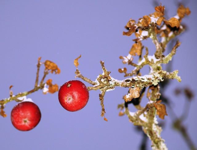 Omena-toverit Kylä-Klemelän taidetalolla