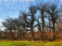 Ruissalon puut
