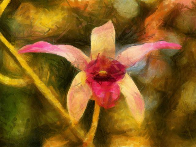 Kukka Ruissalon kasvitieteellisessä puutarhassa