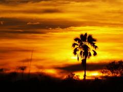 Auringonlasku Botswanalaiseen tapaan -otimme sundouningit eli iltadrinkit