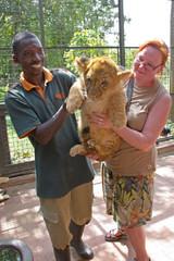 16 kiloinen leijonanpentu on varsin viehättävä