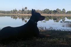 B9 Ylväs koira veden äärellä