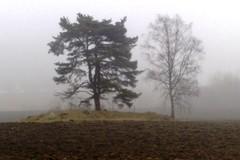A57 Kaksi puuta usvassa