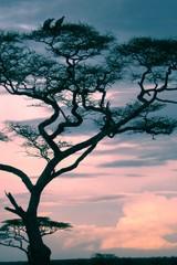 B99 Korppikotkien ilta savannilla