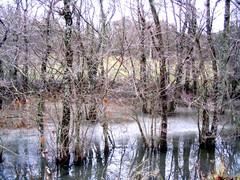 B51 Runkoja tulvajoessa