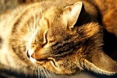 A7 Kissa kyljellään