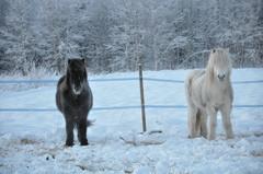 Ukko ja Undri 2.1.2011