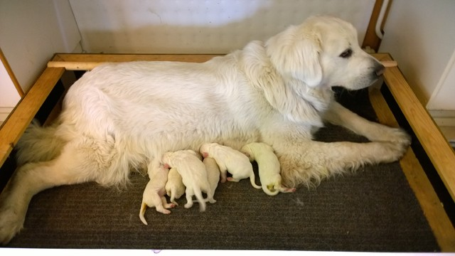 Rosa`s 2nd litter, age 12 hours