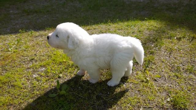 Age 4 weeks, male pup