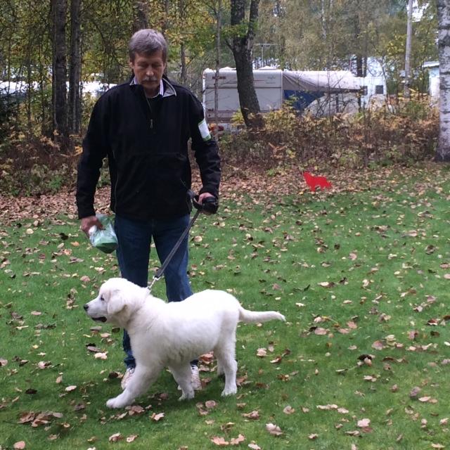 Zuzzu, the best little puppy at Big Flock Guards dog meeting Aurantola 21.09.2014