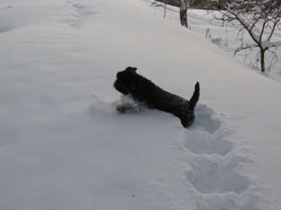 Goldi lumessa 2010
