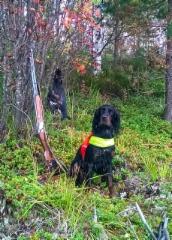 Taiga metsällä Ilomantsissa syksyllä 2015