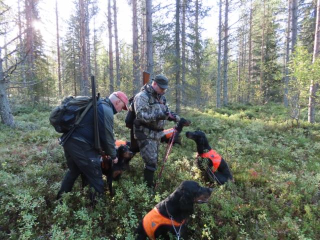 Markku ja Marko metsäkokeessa