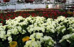 kasvihuone valkoiset beg